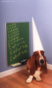 Dog dunce cap