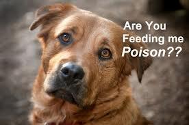 Dog poison 3