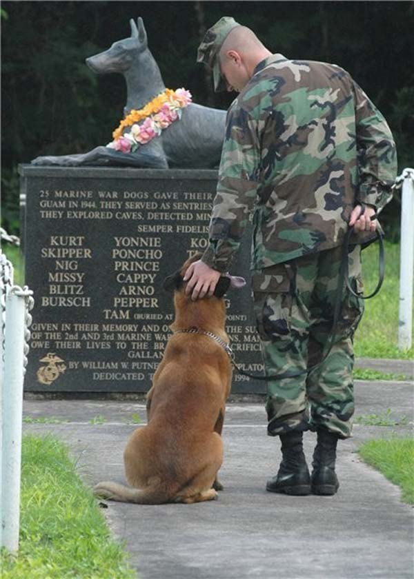 Dog war memorial