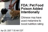 Dog Foods Killing Our Pets