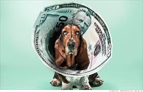 Roger-Biduk-Dog-Money-Collar