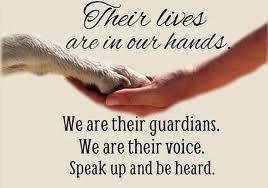 Roger Biduk - Dog We Are Their Guardians