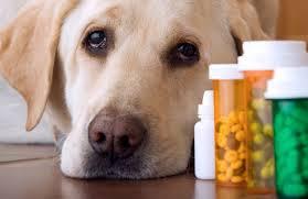 Roger Biduk - Dog pills