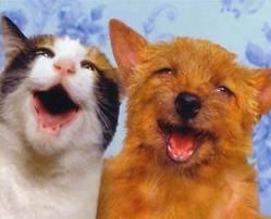 Roger Biduk - Happy dog and cat