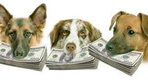 dog money 4