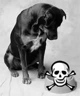 dog scull poison