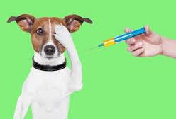 Roger Biduk - Vaccination dog paw over eye