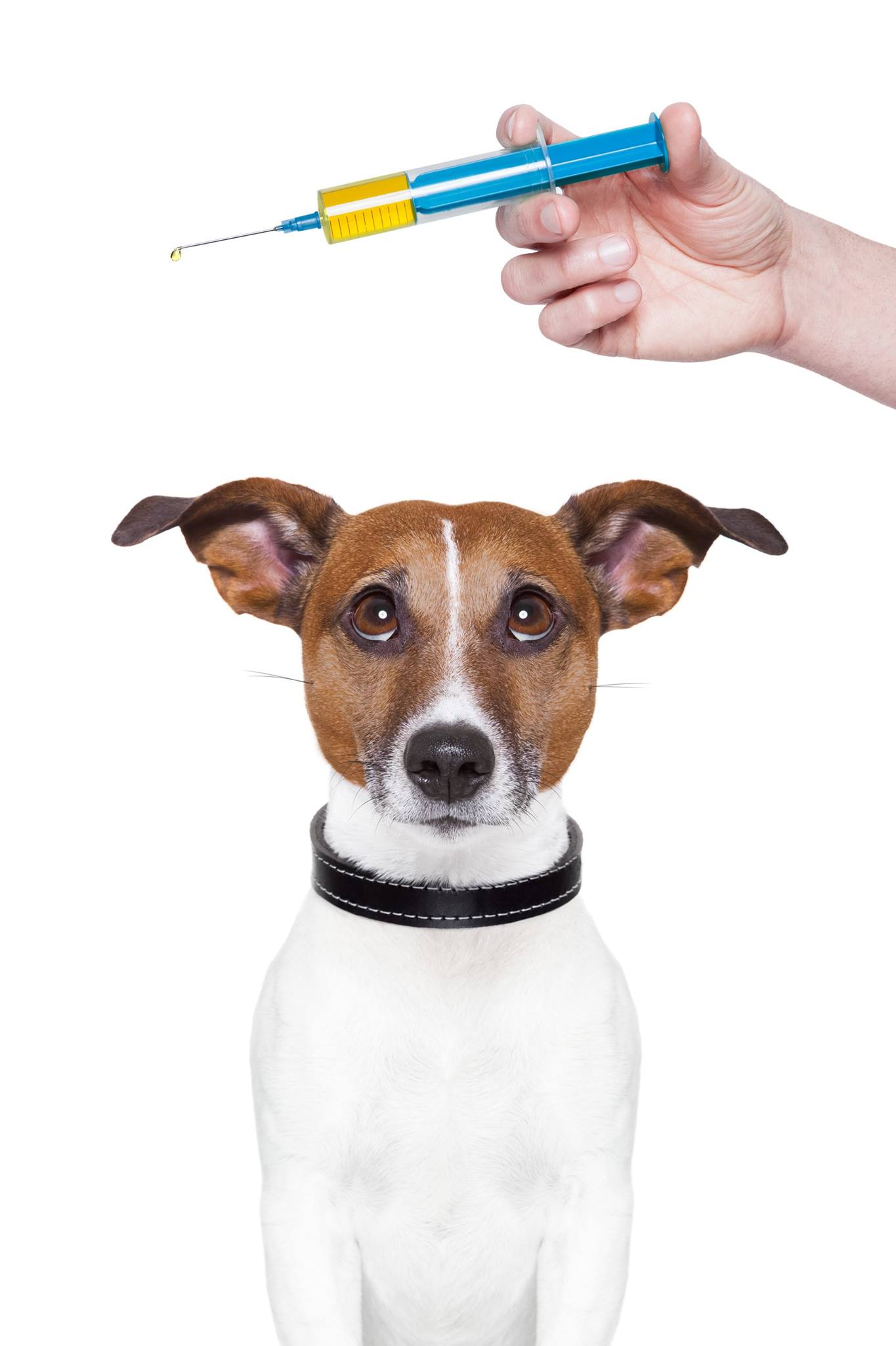 Adverse Vaccine Reactions In Dogs And Cats