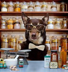 Roger Biduk - Veterinarian pharmacist
