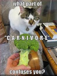 cat-carnivore5.jpg