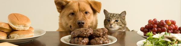 cat-dog-hamburger5.jpg