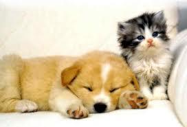 cute-dog-and-cat.jpg