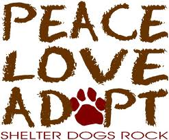 Small Dog Adoption In Durham Ontario