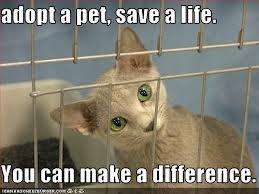 Animal shelter7