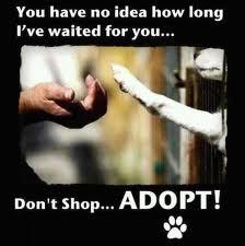 Animal shelter8