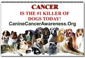 Cancer dogs