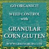 Corn gluten weed 2