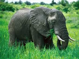 Picture 6 elephant