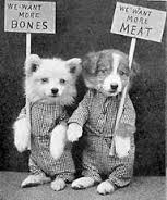 Roger Biduk-Dogs Want More Meat
