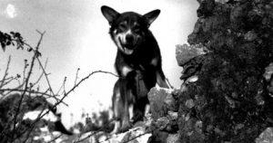 Roger Biduk - Dogs war Chip