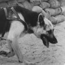 Roger Biduk - Dogs war Kaiser