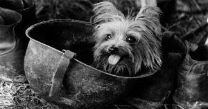 Roger Biduk - Dogs war Smokey