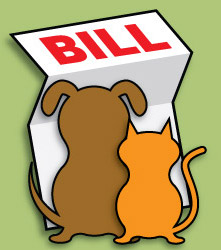 Roger Biduk - Vet bills cat and dog looking at; PC