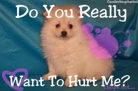 animal abuse 4